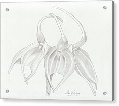 Masdevalia Tovarensis Orchid Acrylic Print