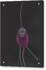 Masdevallia Infracta Orchid Acrylic Print