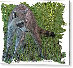 Masked Bandit Acrylic Print by Larry Linton