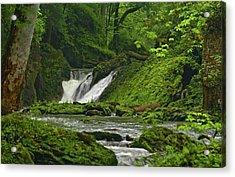 Acrylic Print featuring the photograph Massie Creek Falls by Rick Hartigan