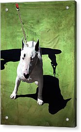 Master And It Acrylic Print