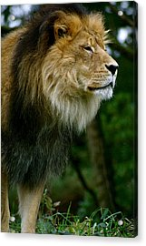 Master Of The Kingdom Acrylic Print by Sonja Anderson