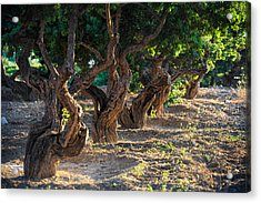 Mastic Tree   Acrylic Print by Emmanuel Panagiotakis