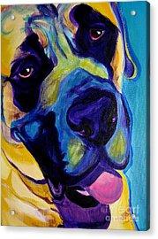 Mastiff - Lazy Sunday Acrylic Print by Alicia VanNoy Call