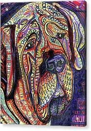 Mastiff Acrylic Print by Robert Wolverton Jr