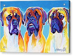 Mastiffs - All In The Family Acrylic Print