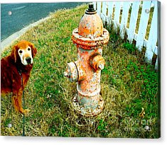 Matching Dog And Fire Hydrant Acrylic Print by Chuck Taylor