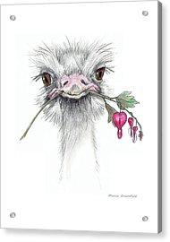 Matilda The Ostrich Acrylic Print