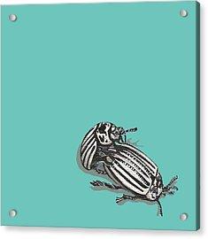 Mating Beetles Acrylic Print by Jude Labuszewski