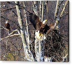 Mating Pair At Nest Acrylic Print