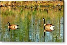 Mating Pair Acrylic Print by Dennis Hammer