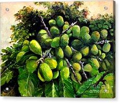 Matoa Fruit Acrylic Print