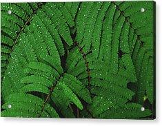 Maui Forest Acrylic Print
