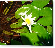 Acrylic Print featuring the photograph Maui Lily by Tamara Bettencourt
