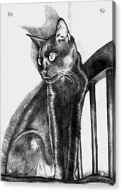 Acrylic Print featuring the drawing Maurice  by Shawna Rowe