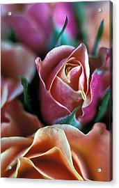 Mauve And Peach Roses Acrylic Print by Kathy Yates
