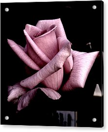 Mauve Flower Acrylic Print by Mohammed Nasir