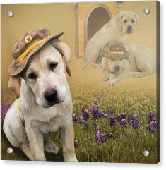 Maverick And Tori - Labrador Art Acrylic Print