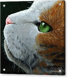 Max - Neighbor Cat Painting Acrylic Print by Linda Apple