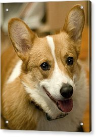Max Acrylic Print by Laurie With