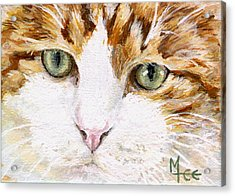 Max Acrylic Print by Mary-Lee Sanders