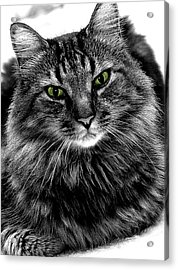MAX Acrylic Print by Michael Shreves