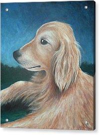 Max- Portrait Of A Golden Retriever Acrylic Print