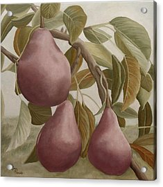 Max Red Bartlett Pears Acrylic Print by Angeles M Pomata