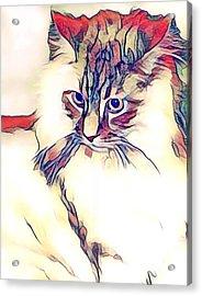 Max The Cat Acrylic Print