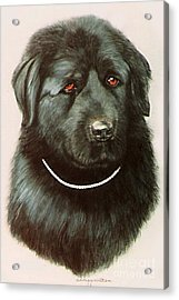 Acrylic Print featuring the painting Maximillan And His Diamond Collar. by DiDi Higginbotham
