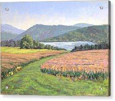 Maxwell Farm Acrylic Print