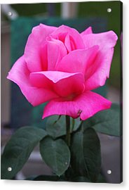 Acrylic Print featuring the photograph May Beauty by Vadim Levin