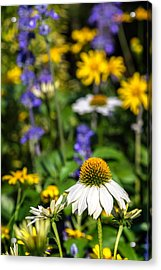 Acrylic Print featuring the photograph May Flowers by Steven Sparks