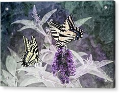 Acrylic Print featuring the photograph May I Join You by Diane Schuster