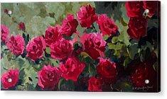 May Roses Acrylic Print by Sandra Strohschein
