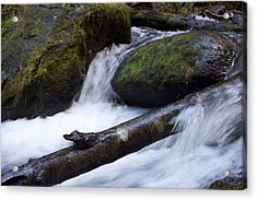 Mccord Log Motion Acrylic Print