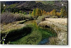 Meadow Creek Acrylic Print