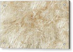 Meadow Fluff Acrylic Print