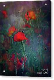 Meadow In Another Dimension Acrylic Print by Agnieszka Mlicka