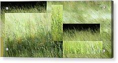 Meadow -  Acrylic Print