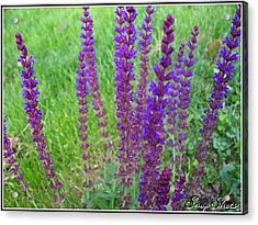 Meadow Sage Acrylic Print by Emily Kelley
