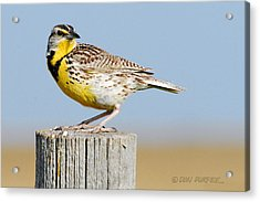 Acrylic Print featuring the photograph Meadowlark 1 by Don Durfee