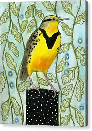Meadowlark Black Dot Box Acrylic Print by Blenda Tyvoll