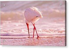 Meandering Beauty Cortez Beach Acrylic Print