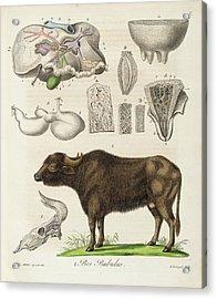 Medical Zoology Or Fair Presentation Acrylic Print