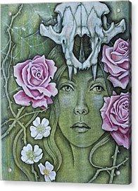 Medicinae Acrylic Print by Sheri Howe