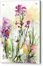 Medicinal Wild Flowers Dames Rocket Hesperus Matronalis Acrylic Print