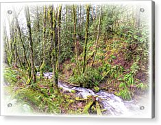 Acrylic Print featuring the photograph Meditation In The Woods by Spencer McDonald