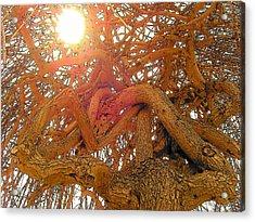 Medusa Arboraceous Acrylic Print by Robert  Collier