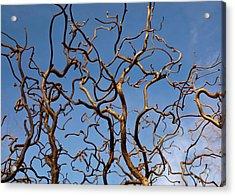 Medusa Limbs Reaching For The Sky Acrylic Print